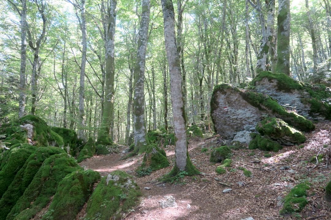 ラヴェルナの緑の森にも秋の足音_f0234936_6382317.jpg