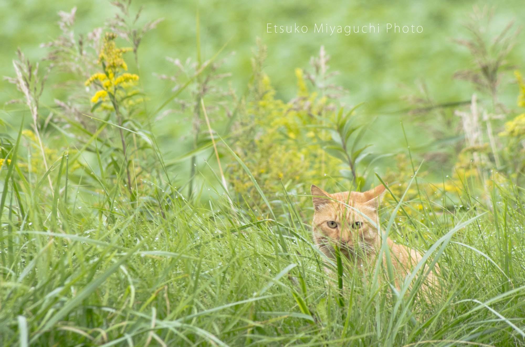 がんばれ、お外の猫さん_f0152939_07503331.jpg
