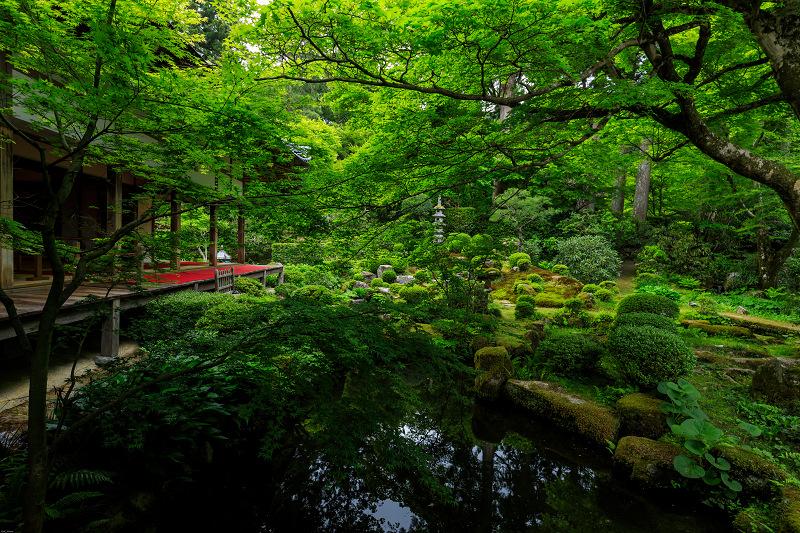 大原菊と春の花咲く三千院_f0155048_21531697.jpg