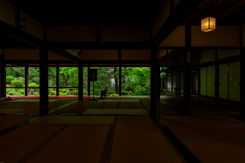 大原菊と春の花咲く三千院_f0155048_2153613.jpg