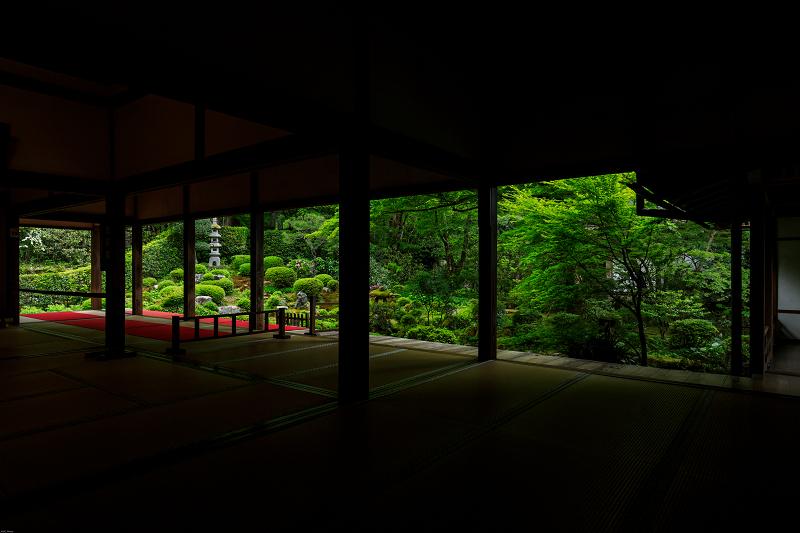 大原菊と春の花咲く三千院_f0155048_2153881.jpg