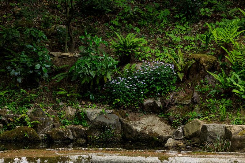 大原菊と春の花咲く三千院_f0155048_21544914.jpg