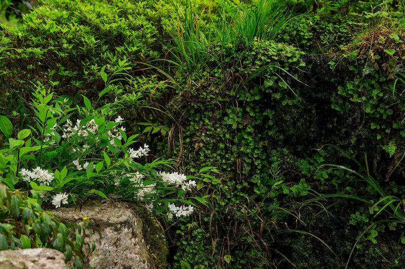 大原菊と春の花咲く三千院_f0155048_21584816.jpg