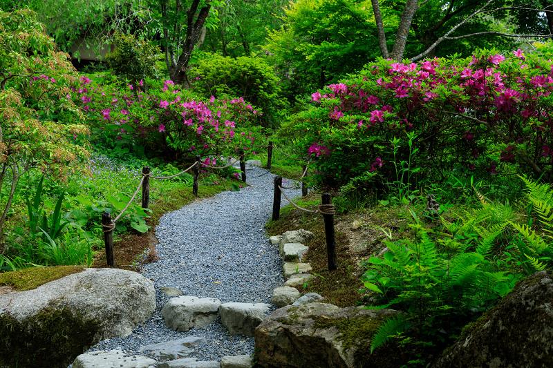大原菊と春の花咲く三千院_f0155048_21592937.jpg