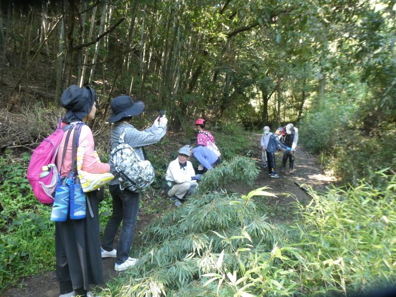 和歌山市から岬社協企画「里山体験」に来訪・・・孝子の森_c0108460_17213004.jpg