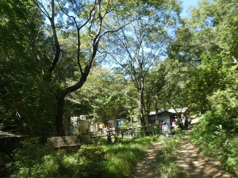 和歌山市から岬社協企画「里山体験」に来訪・・・孝子の森_c0108460_17221314.jpg