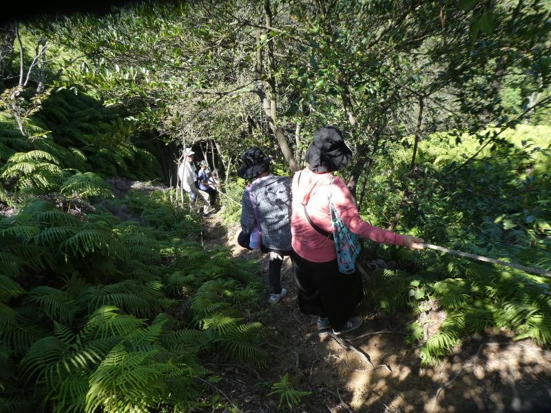 和歌山市から岬社協企画「里山体験」に来訪・・・孝子の森_c0108460_17315430.jpg