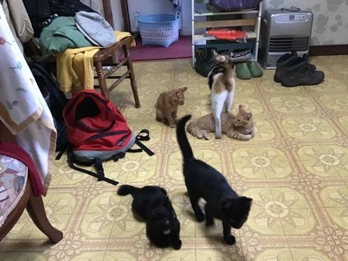 アビーという野良猫 〜 自問自答の繰り返し_c0027188_09022405.jpeg