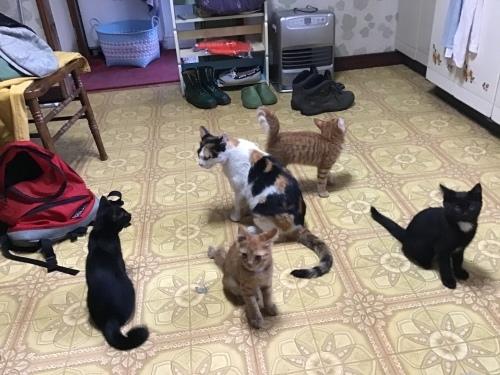 アビーという野良猫 〜 自問自答の繰り返し_c0027188_09024293.jpeg