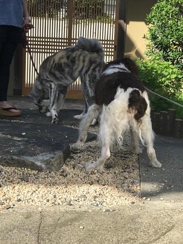 柴っこヒメちゃん、新生活スタート!_f0242002_16110894.jpg