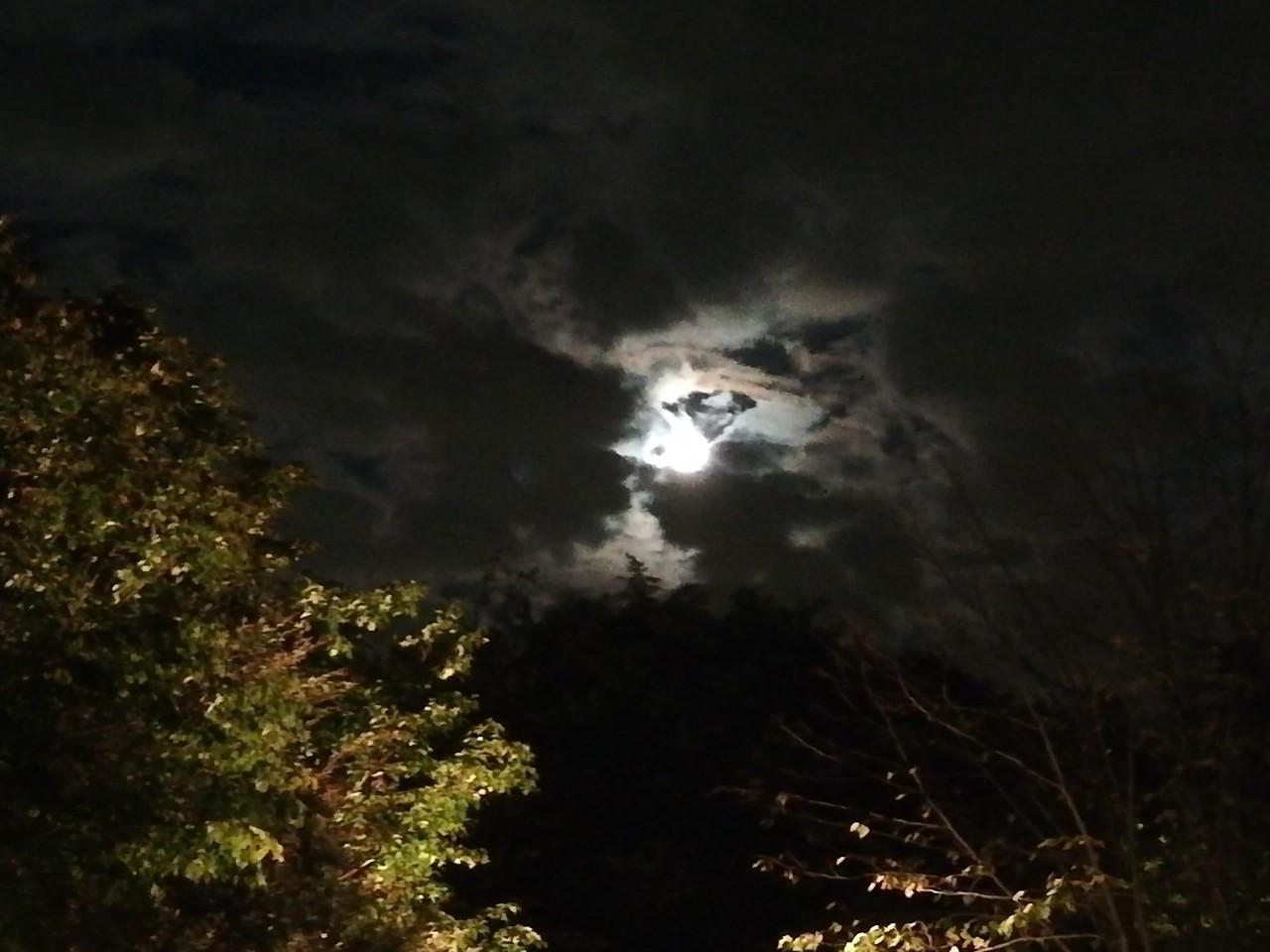 なばなの里でお月見のはずが!!_a0113003_15340688.jpg