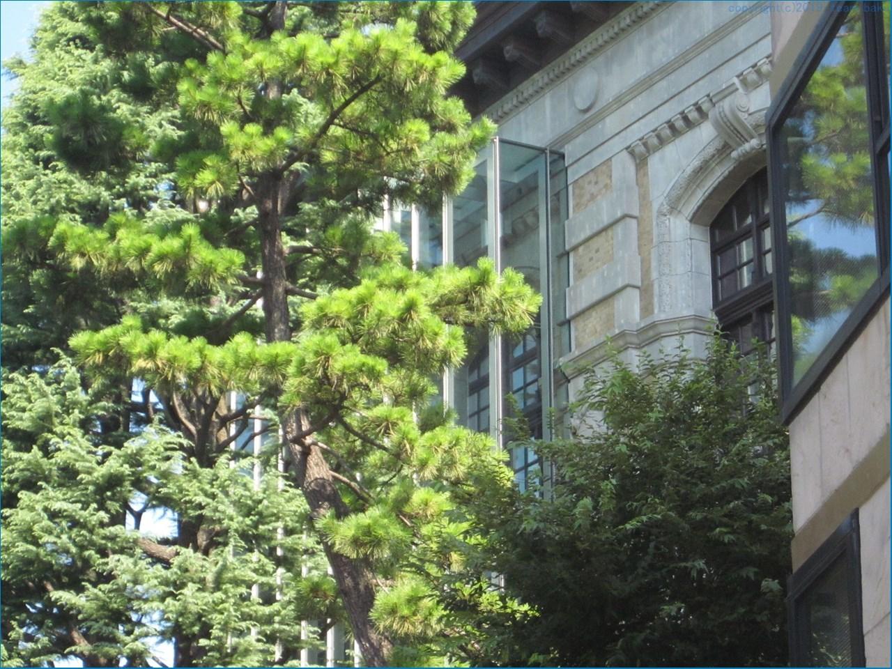 上野公園の近代建築 見学_c0376508_09381489.jpg
