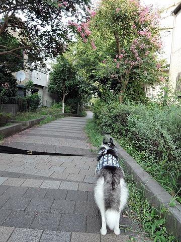 散歩屋日誌【お泊り保育編 1】_c0062832_21134753.jpg