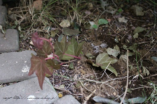 『日比谷花壇』素敵なプリザーブドフラワーのサプライズギフト♪_f0023333_22565858.jpg