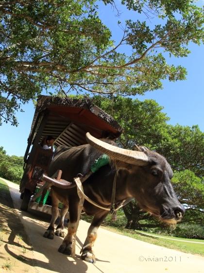 沖縄 おでかけ編 その2 ~恩納村から少し南へ~_e0227942_11312252.jpg