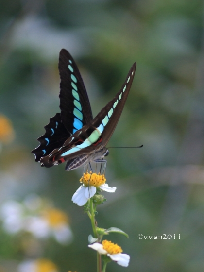 沖縄 出会った生き物たち ~野鳥と猫と蝶々と~_e0227942_21324615.jpg