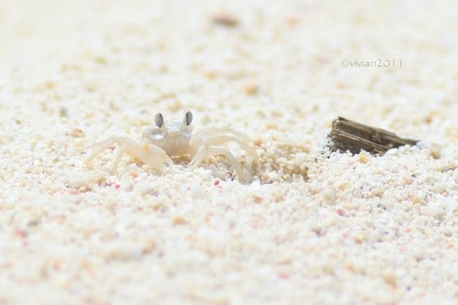 沖縄 出会った生き物たち ~野鳥と猫と蝶々と~_e0227942_21331205.jpg