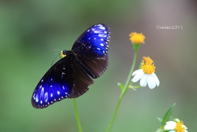沖縄 出会った生き物たち ~野鳥と猫と蝶々と~_e0227942_21334819.jpg