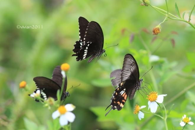 沖縄 出会った生き物たち ~野鳥と猫と蝶々と~_e0227942_21340682.jpg