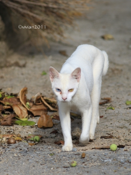 沖縄 出会った生き物たち ~野鳥と猫と蝶々と~_e0227942_21341589.jpg