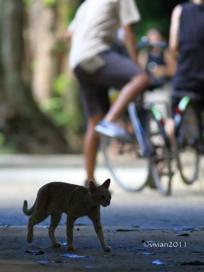 沖縄 出会った生き物たち ~野鳥と猫と蝶々と~_e0227942_21343441.jpg