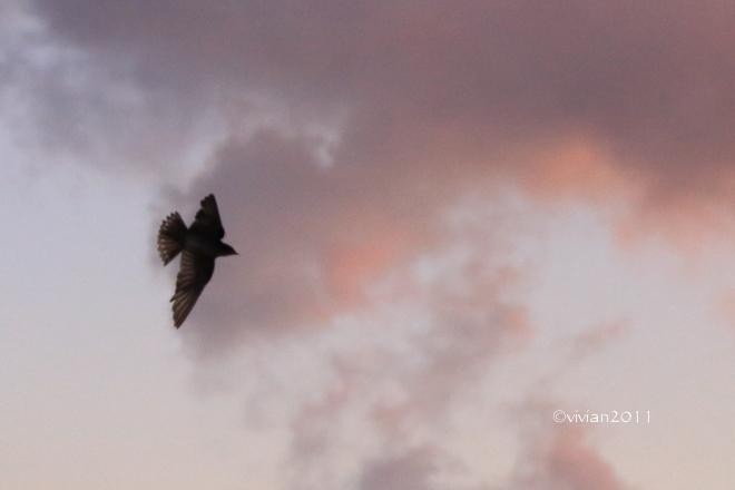 沖縄 出会った生き物たち ~野鳥と猫と蝶々と~_e0227942_21355951.jpg