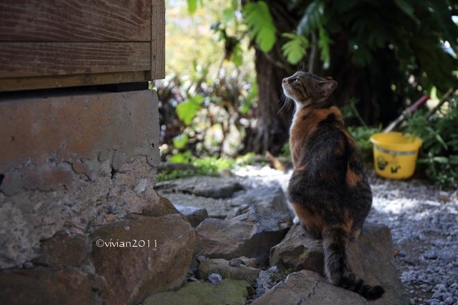 沖縄 出会った生き物たち ~野鳥と猫と蝶々と~_e0227942_22193976.jpg