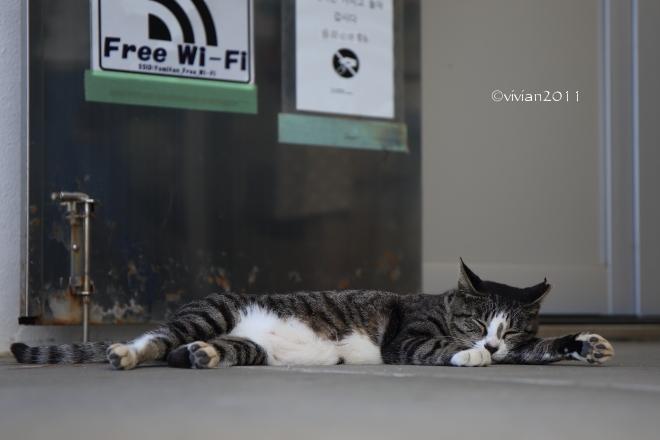 沖縄 出会った生き物たち ~野鳥と猫と蝶々と~_e0227942_22213432.jpg