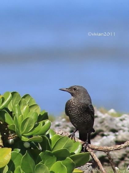 沖縄 出会った生き物たち ~野鳥と猫と蝶々と~_e0227942_22224289.jpg