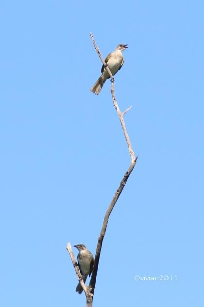 沖縄 出会った生き物たち ~野鳥と猫と蝶々と~_e0227942_22365961.jpg