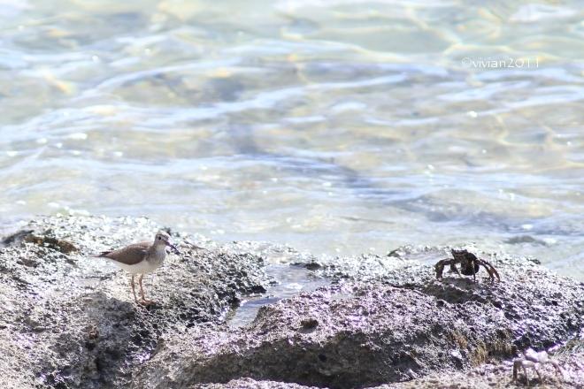 沖縄 出会った生き物たち ~野鳥と猫と蝶々と~_e0227942_22375732.jpg