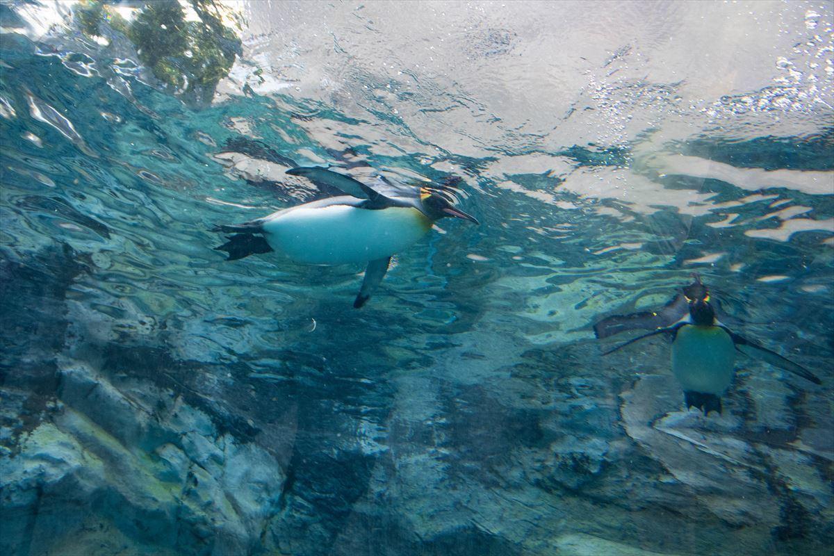 10年以上ブリの旭山動物園_b0281366_18375794.jpg