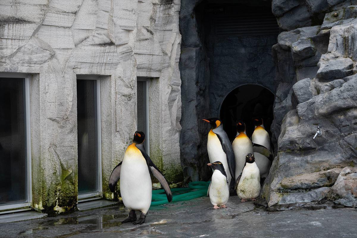 10年以上ブリの旭山動物園_b0281366_18380365.jpg