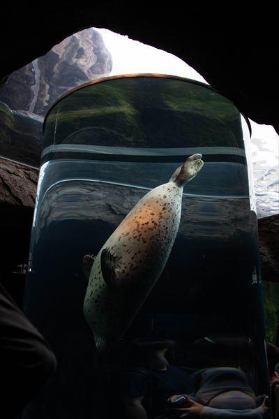 10年以上ブリの旭山動物園_b0281366_18380726.jpg
