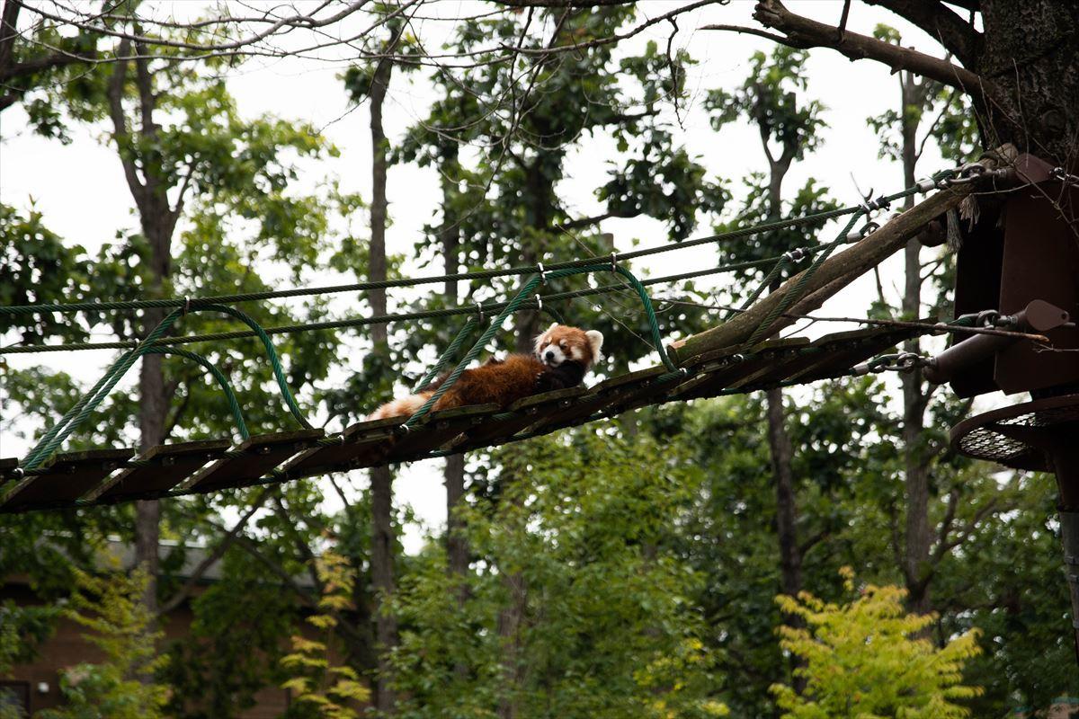 10年以上ブリの旭山動物園_b0281366_18381582.jpg