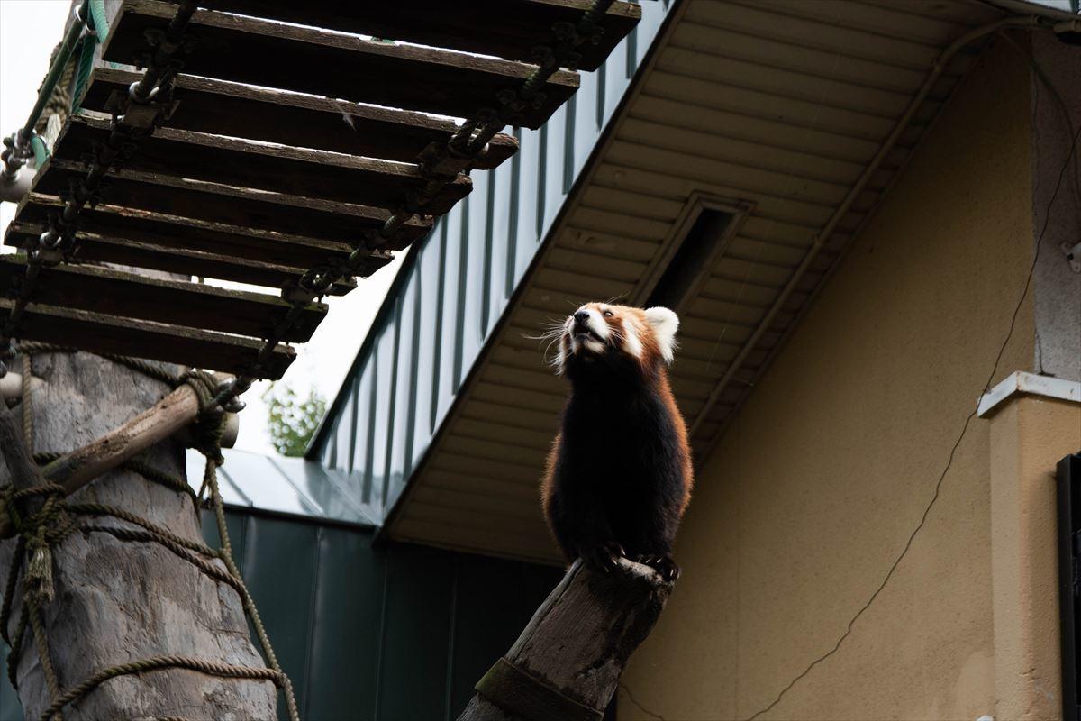 10年以上ブリの旭山動物園_b0281366_18381883.jpg