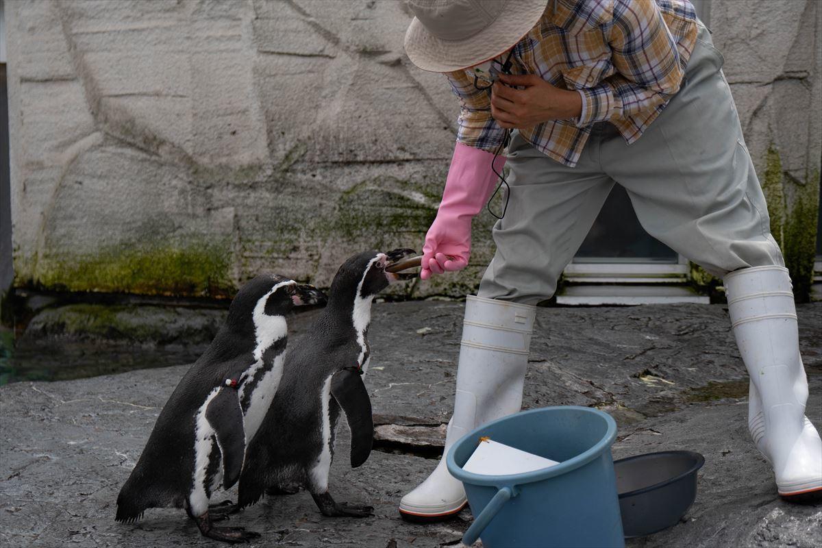10年以上ブリの旭山動物園_b0281366_18382443.jpg