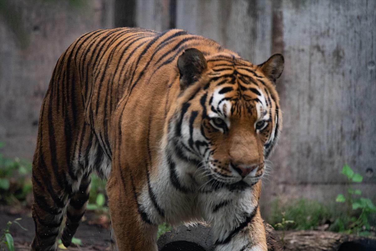 10年以上ブリの旭山動物園_b0281366_18383044.jpg