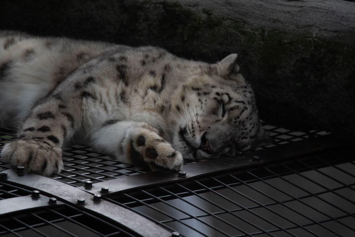 10年以上ブリの旭山動物園_b0281366_18383328.jpg