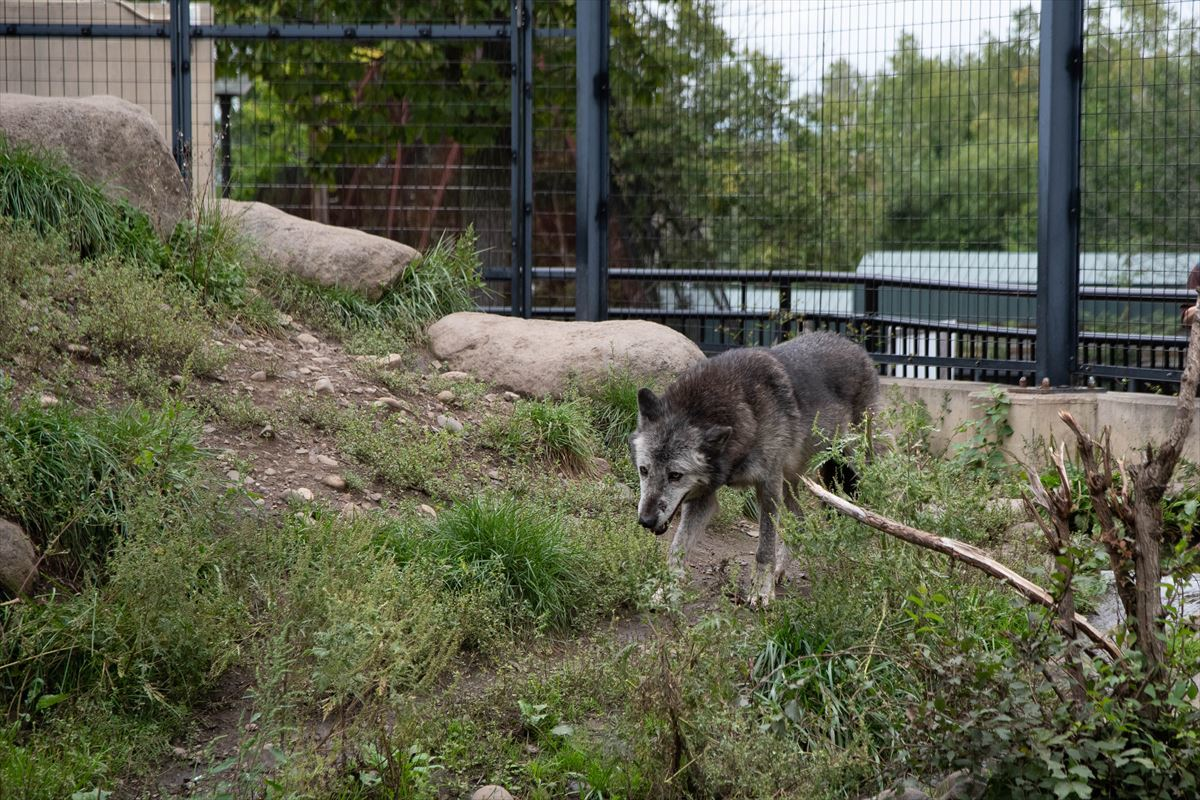 10年以上ブリの旭山動物園_b0281366_18390662.jpg