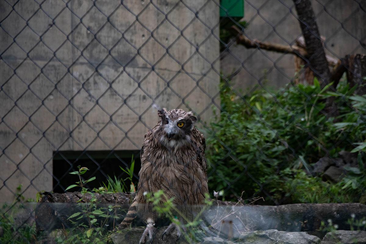 10年以上ブリの旭山動物園_b0281366_18391051.jpg