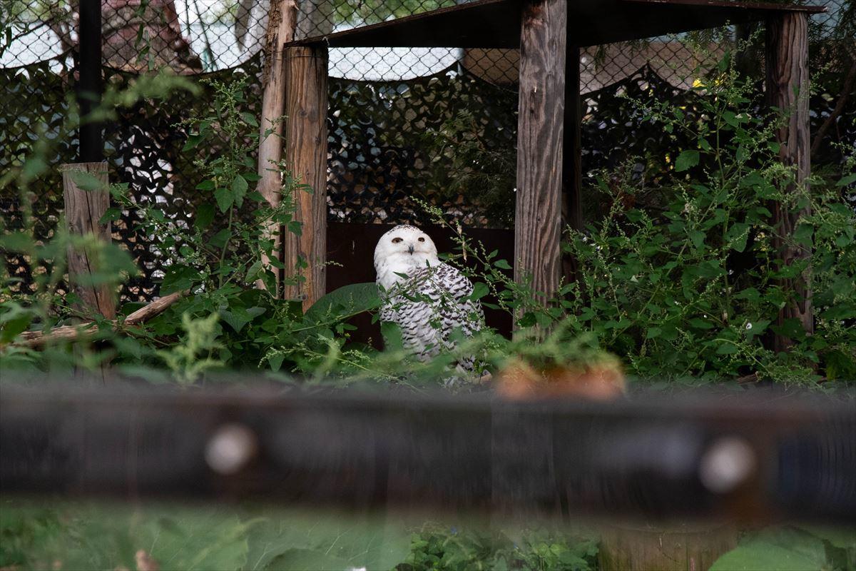 10年以上ブリの旭山動物園_b0281366_18391284.jpg