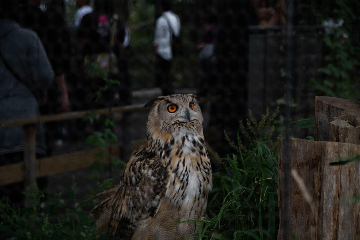 10年以上ブリの旭山動物園_b0281366_18392896.jpg