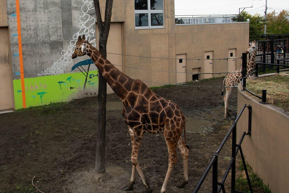 10年以上ブリの旭山動物園_b0281366_18393634.jpg