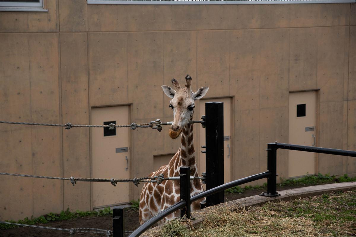 10年以上ブリの旭山動物園_b0281366_18394085.jpg