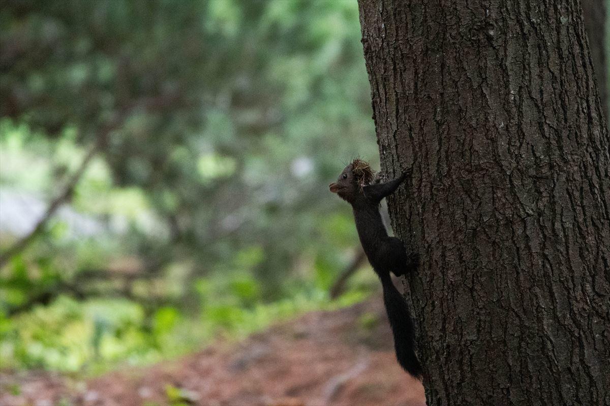 10年以上ブリの旭山動物園_b0281366_18401066.jpg