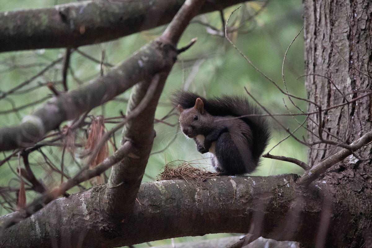 10年以上ブリの旭山動物園_b0281366_18401419.jpg