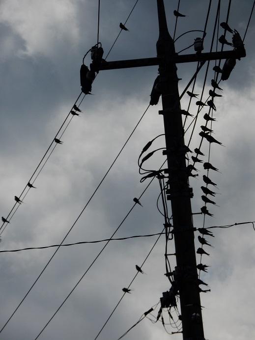 電線の五線譜に…_e0175370_11591674.jpg