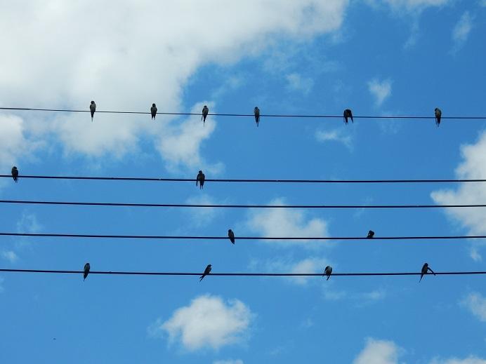電線の五線譜に…_e0175370_12000524.jpg