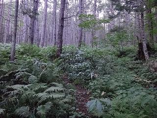 旧歩荷道から西穂高岳_e0064783_19394310.jpg